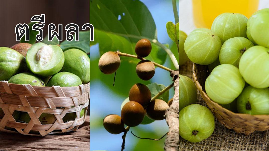 พืชผักสมุนไพร<strong>ป้องกันโรค</strong> COVID 19 #13