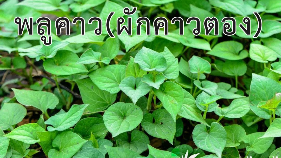พืชผักสมุนไพร<strong>ป้องกันโรค</strong> COVID 19 #2