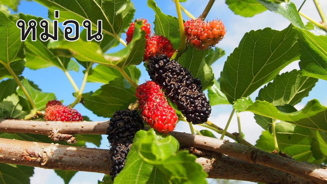 พืชผักสมุนไพร<strong>ป้องกันโรค</strong> COVID 19 #6