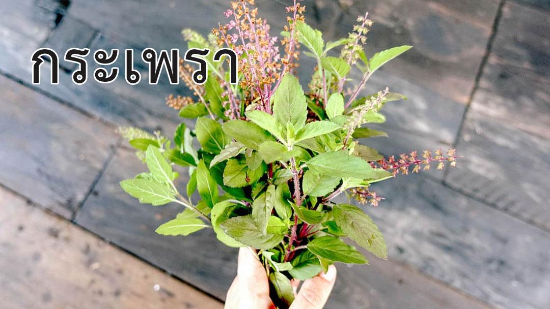 พืชผักสมุนไพร<strong>ป้องกันโรค</strong> COVID 19 #8